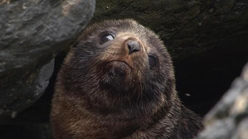 t4 seals coloney15